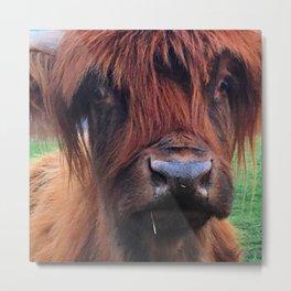 Scottish Highland Cow - Maxine Metal Print