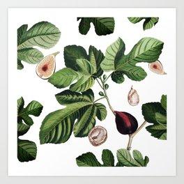 Figs White Art Print