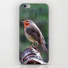 Robin in the rain iPhone & iPod Skin