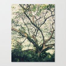 Botanic Garden Canvas Print