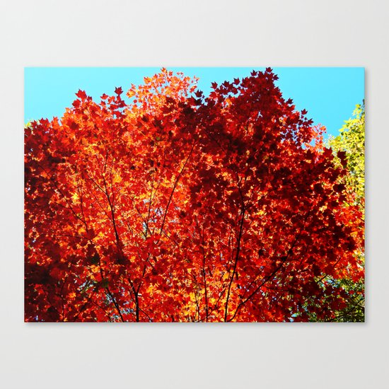 Red Maple Explosion Canvas Print