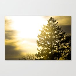Silhouette Tree Canvas Print
