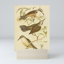 Vintage Print - The Birds of Australia (1890) - Scimitar Babblers Mini Art Print
