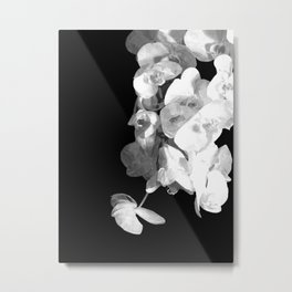White Orchids Black Background Metal Print