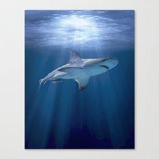 Cruising Shark Canvas Print