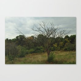 Hazy Forest No.3 Canvas Print