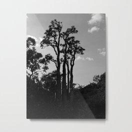 Exotic Tropical Trees Silhouette, Socotra Island Metal Print