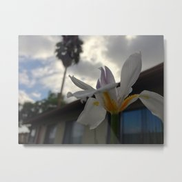 African Lily Blurred Background Metal Print