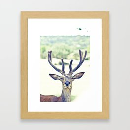 Hipster Reindeer  Framed Art Print