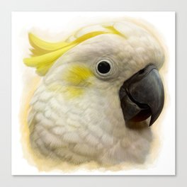 Sulphur Crested Cockatoo realistic painting Canvas Print