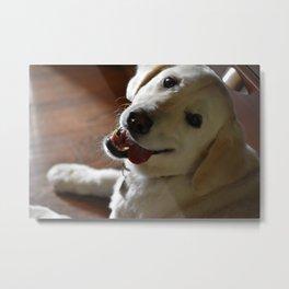 Smiling Pup Metal Print