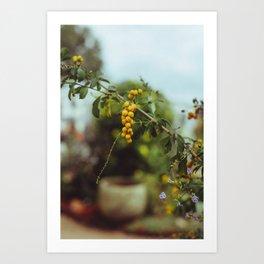 Yellow Berry Art Print