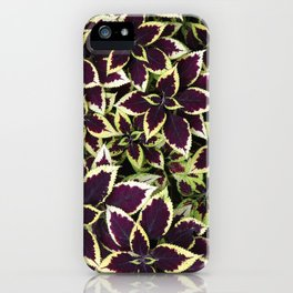Coleus Plant Leavs iPhone Case