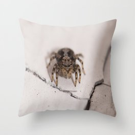 Stalking prey Throw Pillow