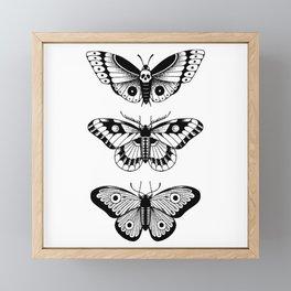 Moths Framed Mini Art Print