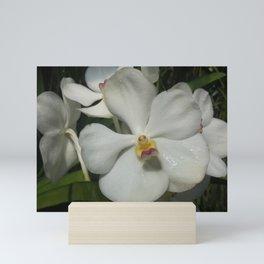 White Diamond Mini Art Print