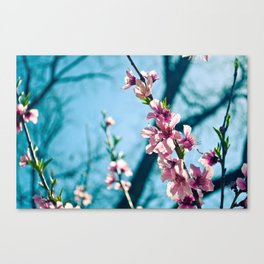 Spring has come Canvas Print