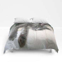 Russian Grey Cross Tabby Cat  Comforters