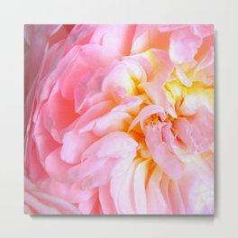 Candy Pink Rose Metal Print