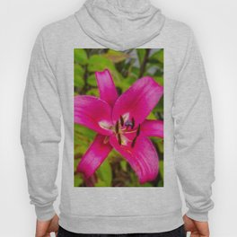 Acapulco Lily Hoody