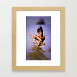 The Abaconian Parrot Framed Art Print