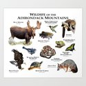 Animals of the Adirondacks by wildlife-art