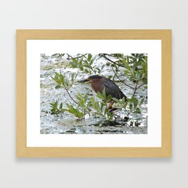 Green Heron at Lakeside Framed Art Print