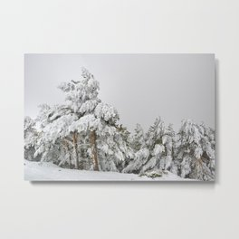 """Ghost forest"". After the snowstorm Metal Print"