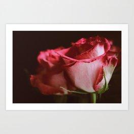 Roses No.1 Art Print