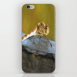 Resting Dragonfly iPhone Skin