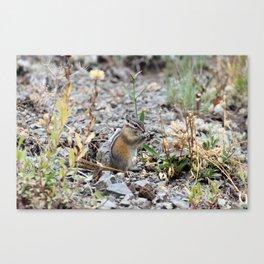 Chipmunk in Landscape Canvas Print