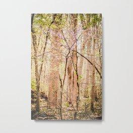Redbud In The Woods Metal Print