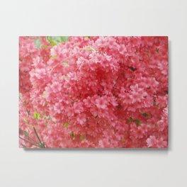 Pink Flowers Metal Print