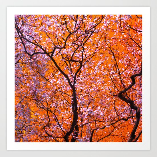 autumn tree IX Art Print