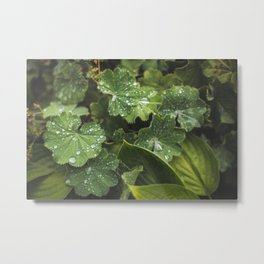 Live the leaves!!! Metal Print