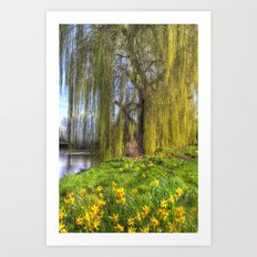 Daffodils and Willow Tree Art Print