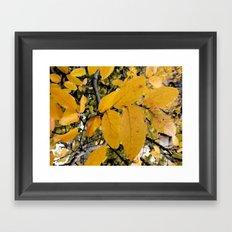 Yellow Leaves of Autumn Framed Art Print