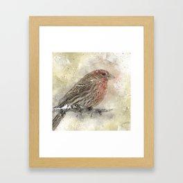 House Finch Framed Art Print