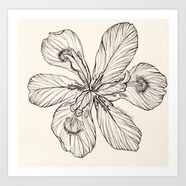 Floral Ink Illustration Art Print