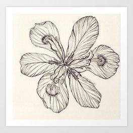 Floral Ink Illustration Art Print