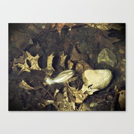 The Lone Feather Canvas Print