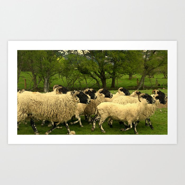 Being Herd #2 Art Print