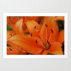 Bright lily Art Print