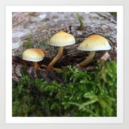 Forest Mushrooms Art Print