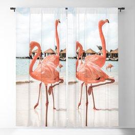 Pink Flamingos On Aruba Island Art Photo | Caribbean Beach Wall Print | Tropical Travel Photography Blackout Curtain