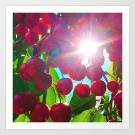 Summer Cherries Art Print