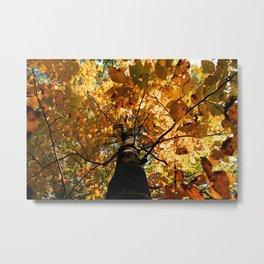 Autumn Is Glorious Metal Print