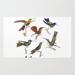 Six Colorful Hummingbirds Rug