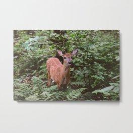Forest Deer XXIV Metal Print