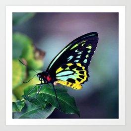 Fluorescent Birdwing Art Print